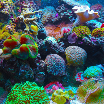 In Search of Vegan Reef Safe Sunscreen