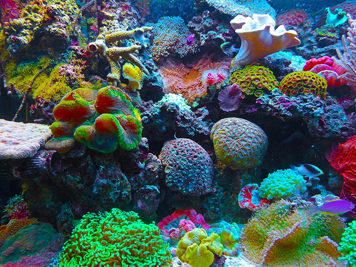 Vegan Reef Safe Sunscreen