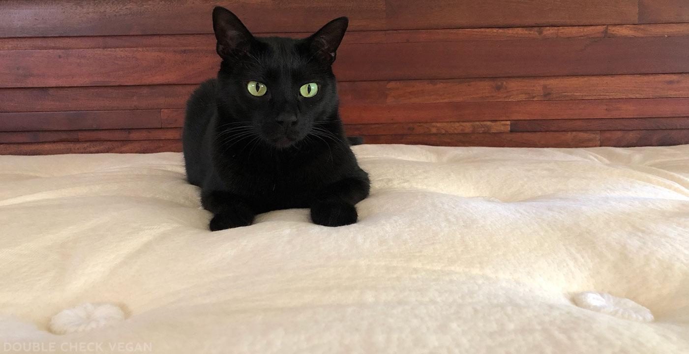 Avocado vegan mattress with black cat